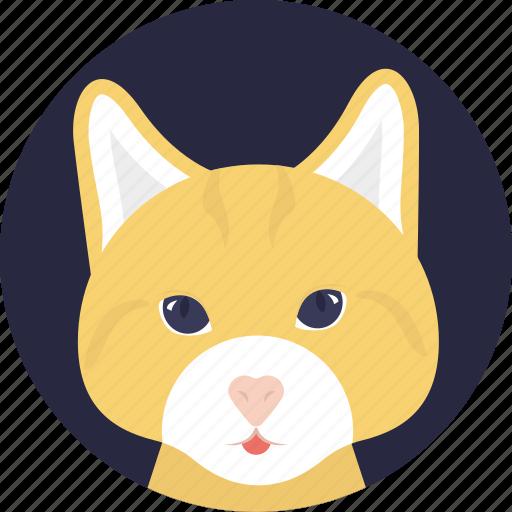 cartoon character, cat face, domestic animal, kitten, pet icon