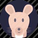 fancy mouse, pocket pet, mouse, house mouse, domestic mouse