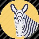 mammals, wildlife, safari animal, zoo animal, zebra face