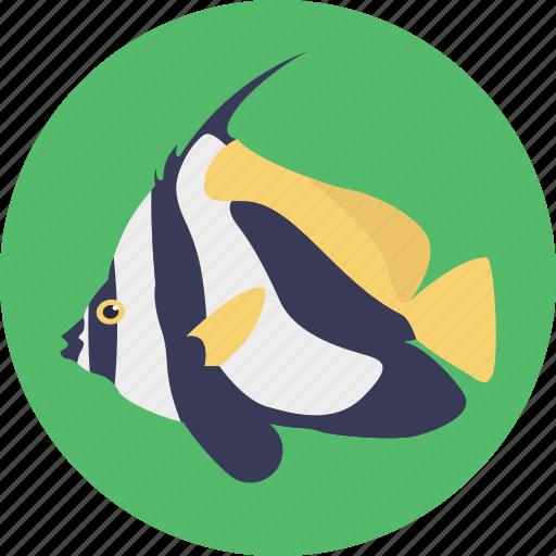 Aquatic fish, fish, sealife, tropical icon - Download on Iconfinder