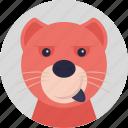 soft toy, fluffy, teddy bear, bear, animal