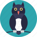 animal, bird, cartoon bird, cartoon owl, owl