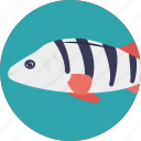 fish, pet fish, freshwater fish, aquatic fish, sea life