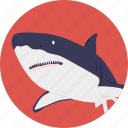 animal, fish, mammal, sea life, whale icon