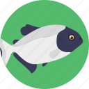 aquatic fish, fish, freshwater fish, pet fish, sea life icon