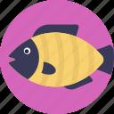 aquatic fish, fish, freshwater fish, pet fish, sea life