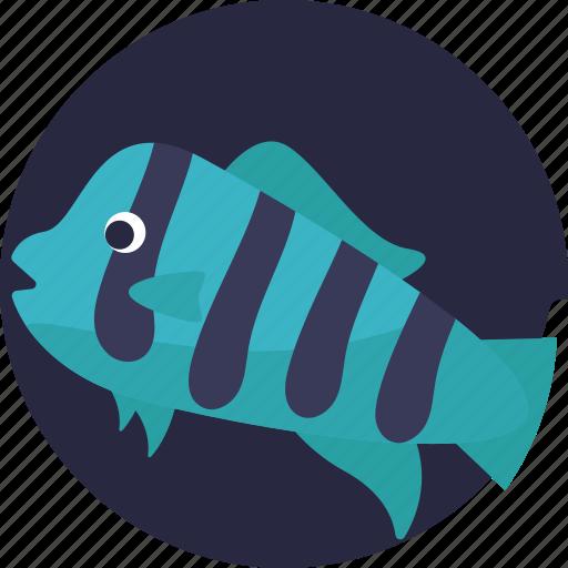 aquatic fish, fish, sealife, tropical icon