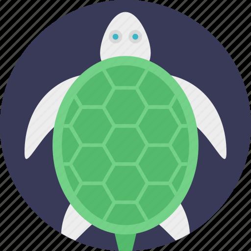 sea animal, sea life, sea turtle, tortoise, turtle icon