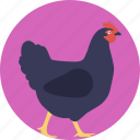 animal, chicken, female bird, female chicken, hen icon