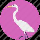 animal, flightless african bird, largest living bird, long neck bird, ostrich icon