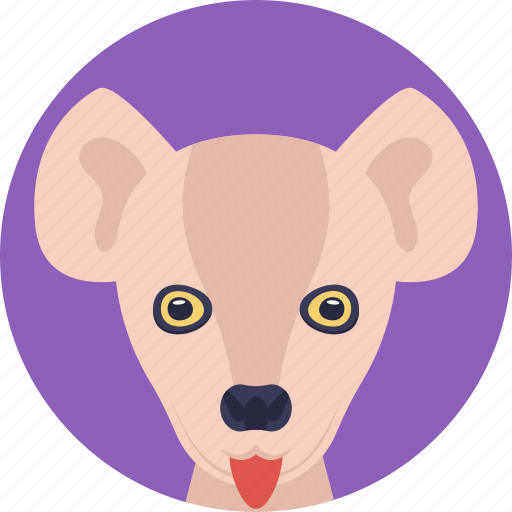 animal, cartoon kangaroo, kangaroo, land animal, zoo icon