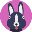 animal, bunny, hare, mammal, rabbit icon