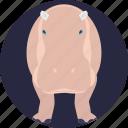african mammal, animal, hippo, hippopotamus, land mammal icon