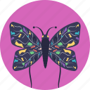 butterfly, colorful butterfly, creature, garden, insect icon
