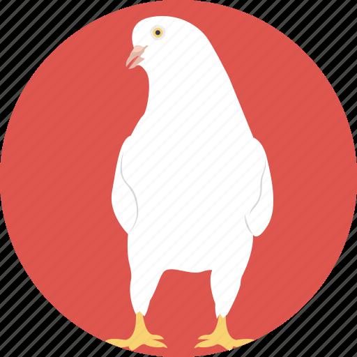 animal, chicken, female bird, female chicken, hen icon