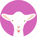 animal, baby sheep, goat, lamb, young sheep icon
