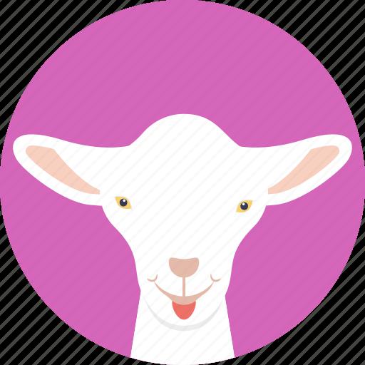 animal, baby sheep, goat, lamb, young sheep icon