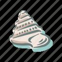 seashell, shell, sea, mollusk, shellfish, nautical, ocean