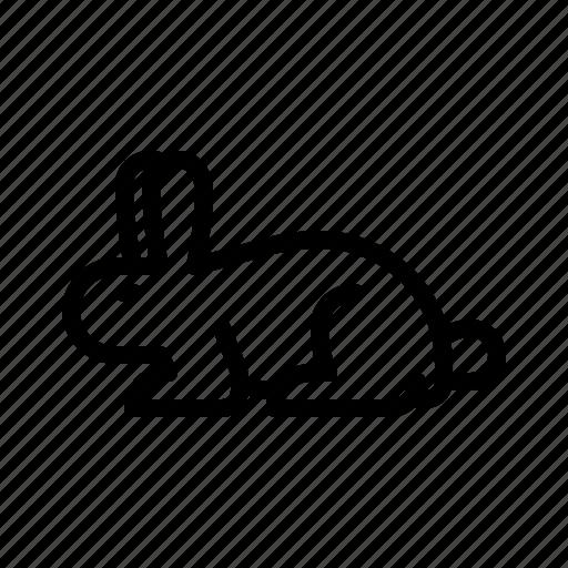 animal, bunny, easter, hare, rabbit icon
