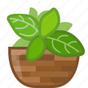 basil, cooking, dish, herbs, seasoning, spice, yumminky icon