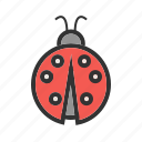 beetle, flying, insect, leaf, nature, red