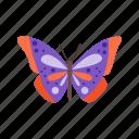 beauty, butterflies, butterfly, colorful, flower, nature, summer