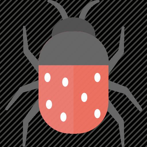 Antivirus, bug, cybercrime, malware, virus icon - Download on Iconfinder