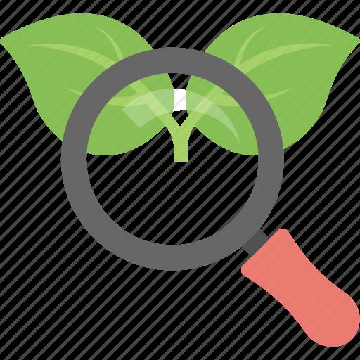 organic content, organic keyword, organic seo, search engine, serp icon