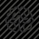 brain, knowledge, mind