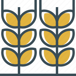 barley, beer, outline, yellow icon