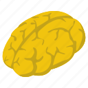 artificial intelligence, brain, human brain, human mind, intelligence, mind icon