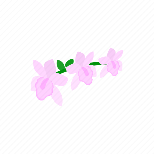 blossom, flower, isometric, nature, orchid, pink, plant icon