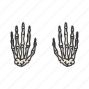 anatomy, bones, hand bones, human anatomy, human hands, medical, skeleton