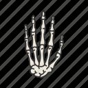 boney band, hand, hand bones, human anatomy, human hand, phalagne, skeleton