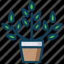plant, pot, smart farm