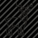 reindeer, deer, animal, christmas