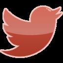 bird, media, social, twitter icon
