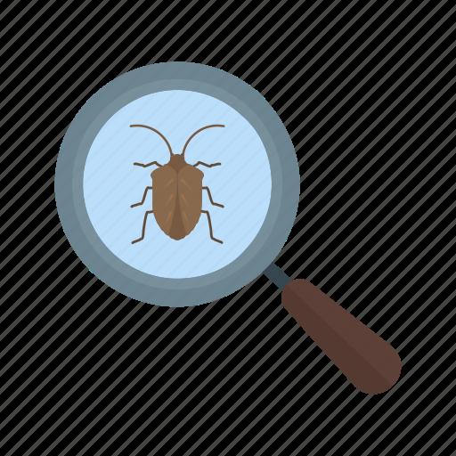 bug, computer, development, error, security, virus, website icon