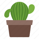 cactus, interior, office, plant icon