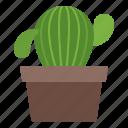 cactus, office, interior, plant