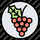 berry, fruit, grape, nature, wine