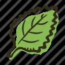 cook, food, herb, ingredient, leaf, mint, spice