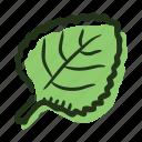 leaf, food, herb, melissa, cook, ingredient, spice icon