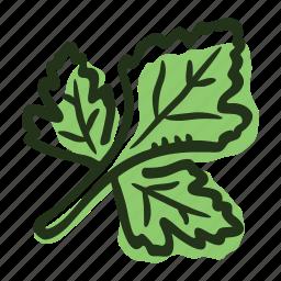 cook, food, herb, ingredient, leaf, parsley, spice icon