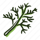 cook, dill, food, herb, ingredient, leaf, spice icon