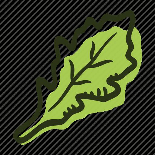 arugula, cook, food, herb, ingredient, leaf, spice icon