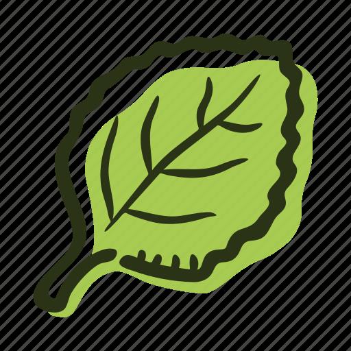 cook, food, herb, ingredient, leaf, oregano, spice icon