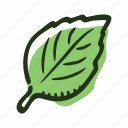 basil, cook, food, herb, ingredient, leaf, spice icon