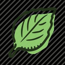 basil, cook, food, herb, ingredient, leaf, spice icon