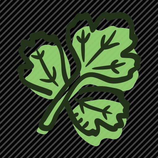coriander, coriander leaf, herb, ingredient, leaf, plant, spice icon